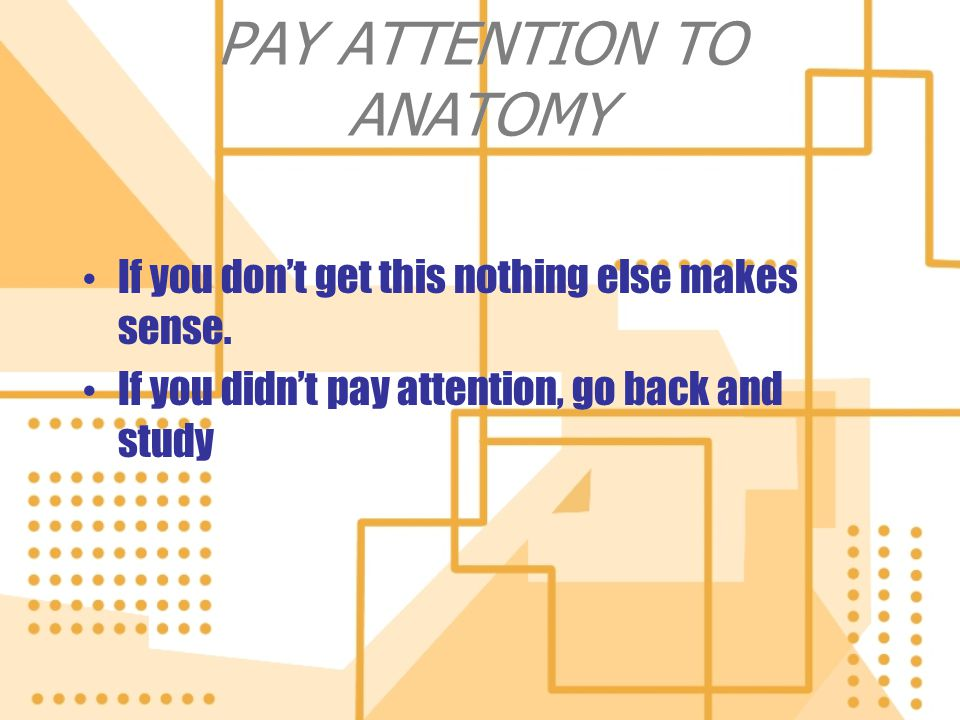 PAY ATTENTION TO ANATOMY
