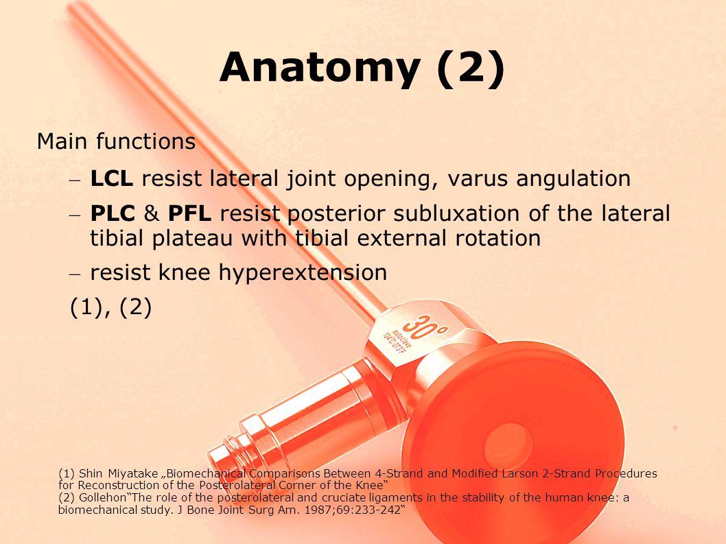 Anatomy (2) Main functions