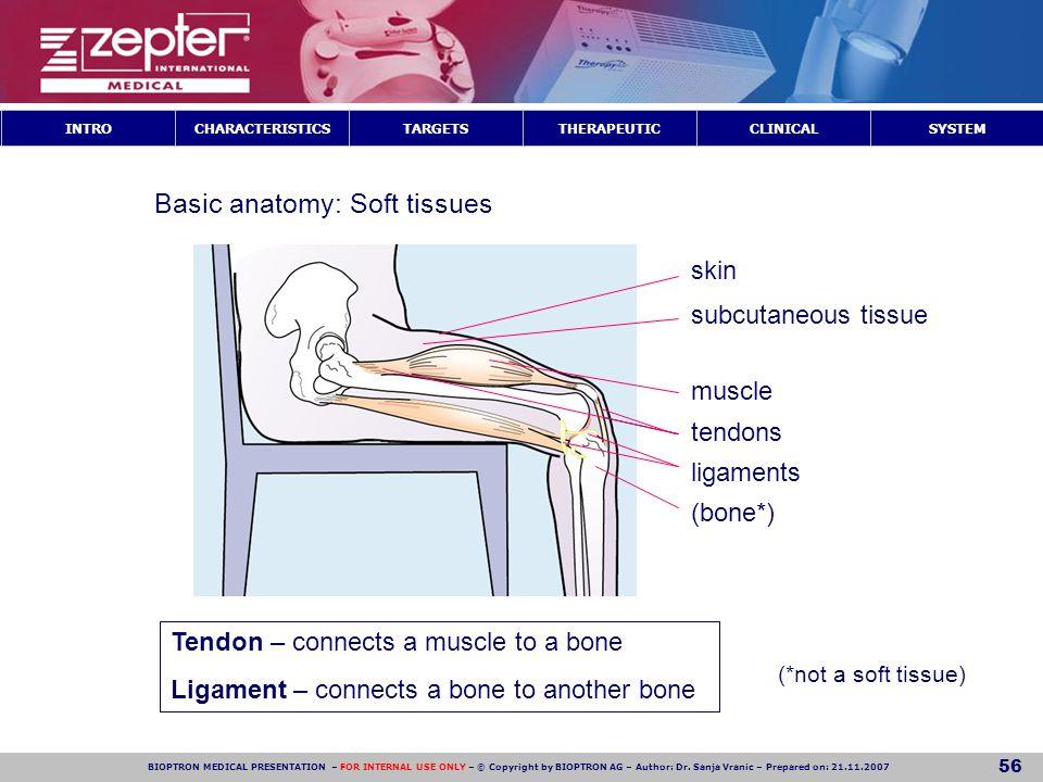 Basic anatomy: Soft tissues