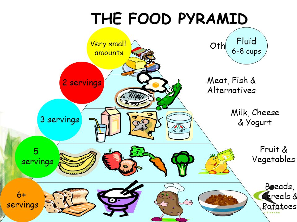 THE FOOD PYRAMID Fluid Others 2 servings Meat, Fish & Alternatives