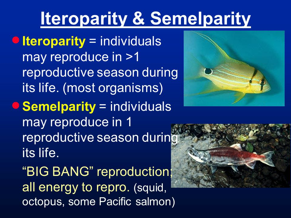 Iteroparity & Semelparity