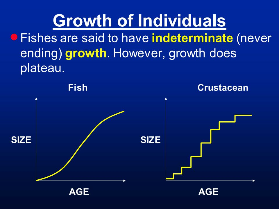 Growth of Individuals Fishes are said to have indeterminate (never ending) growth. However, growth does plateau.