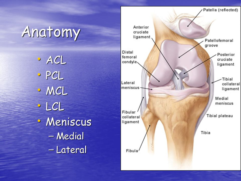 Anatomy ACL PCL MCL LCL Meniscus Medial Lateral