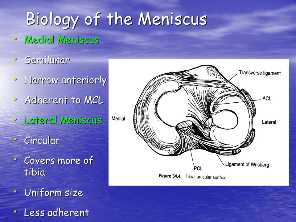 Biology of the Meniscus