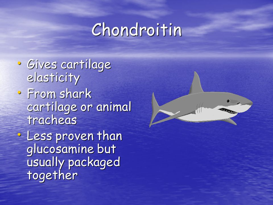 Chondroitin Gives cartilage elasticity