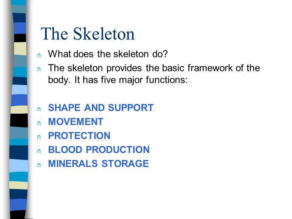 The Skeleton What does the skeleton do