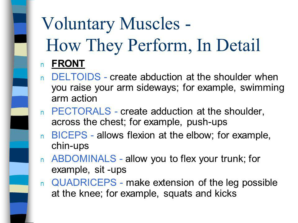 Voluntary Muscles - How They Perform, In Detail