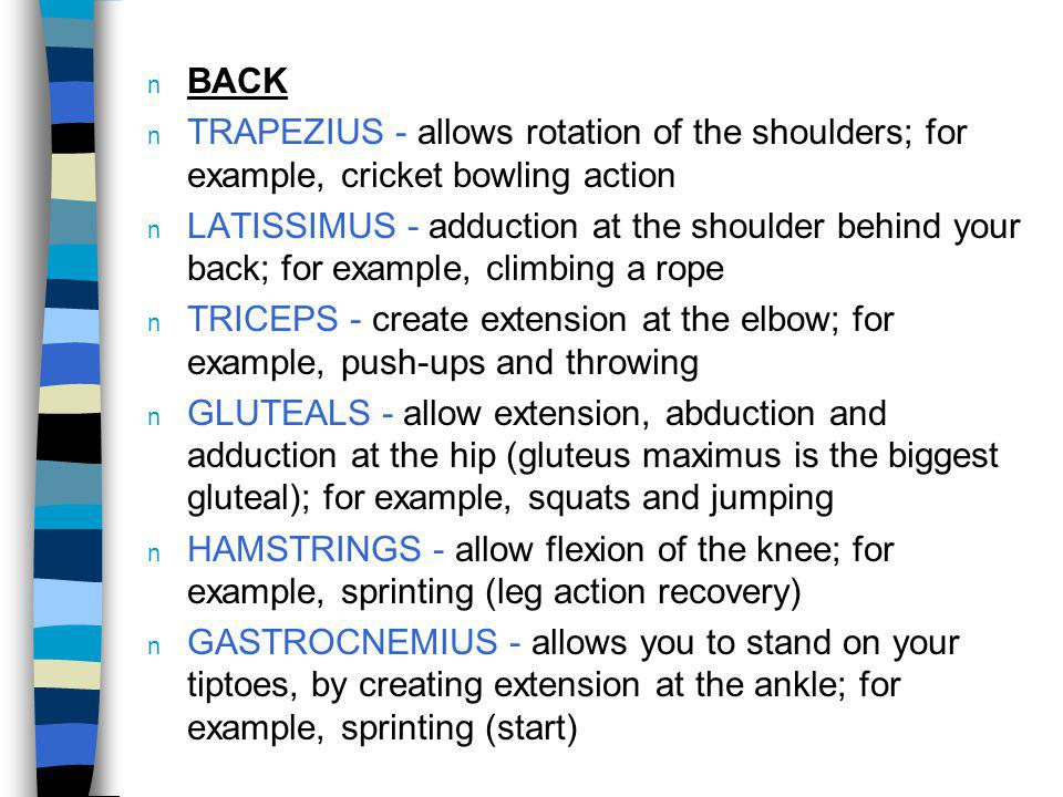 BACK TRAPEZIUS - allows rotation of the shoulders; for example, cricket bowling action.