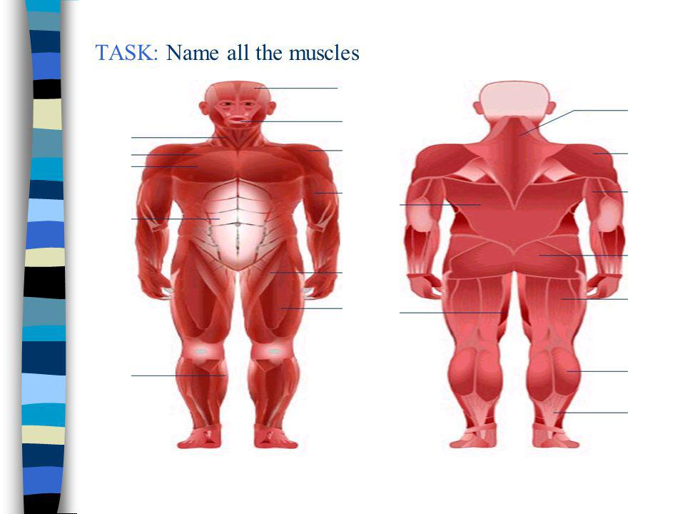 TASK: Name all the muscles