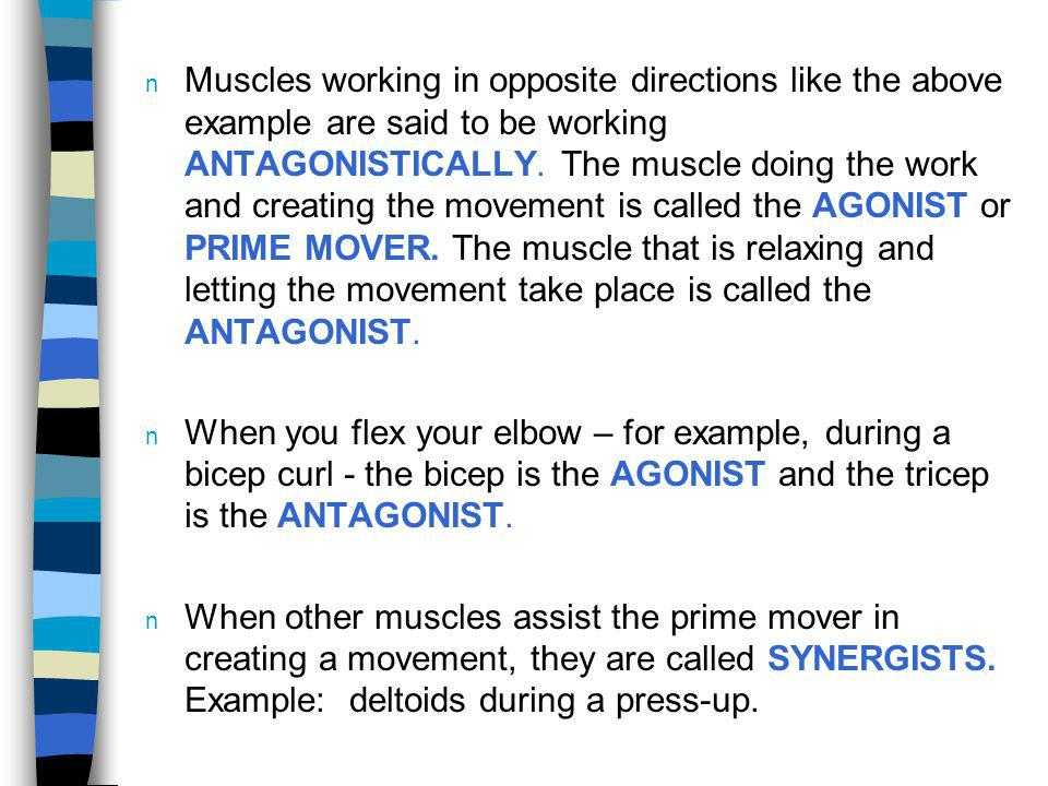 Muscles working in opposite directions like the above example are said to be working ANTAGONISTICALLY. The muscle doing the work and creating the movement is called the AGONIST or PRIME MOVER. The muscle that is relaxing and letting the movement take place is called the ANTAGONIST.