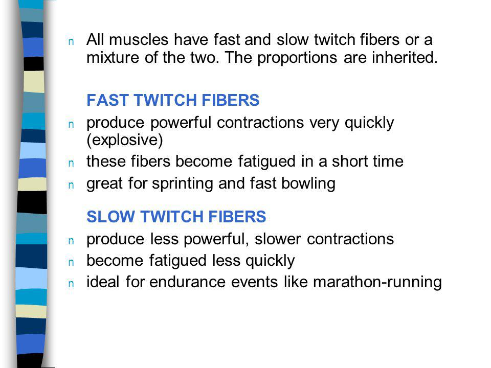 All muscles have fast and slow twitch fibers or a mixture of the two