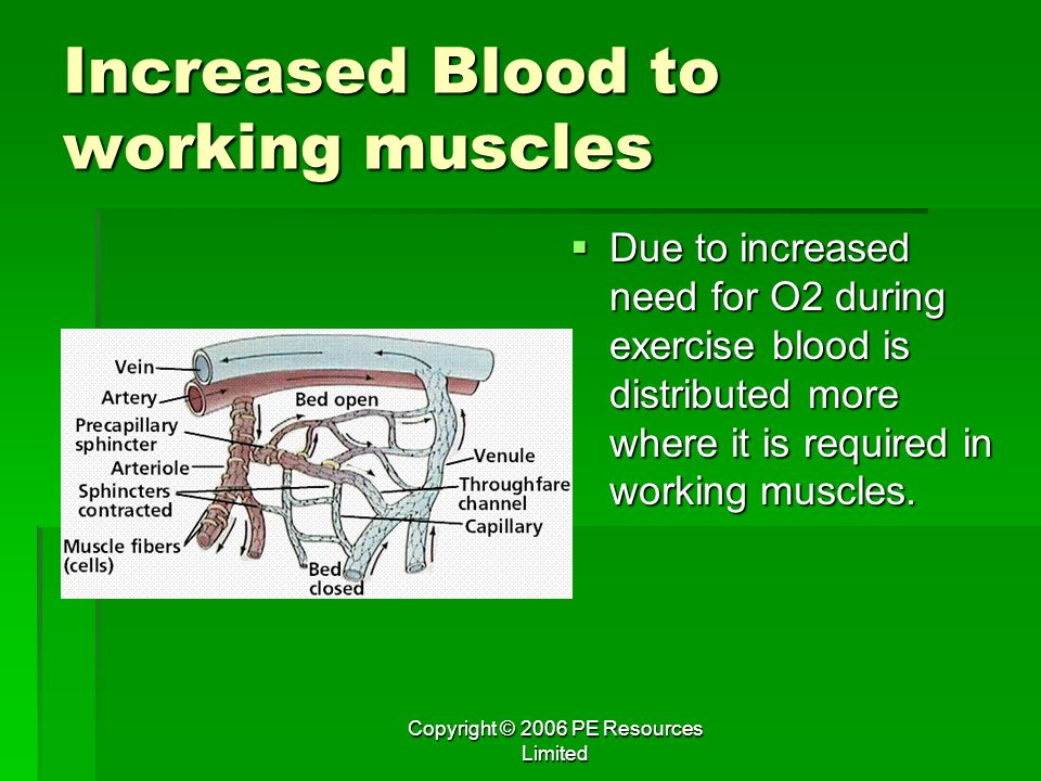 Increased Blood to working muscles