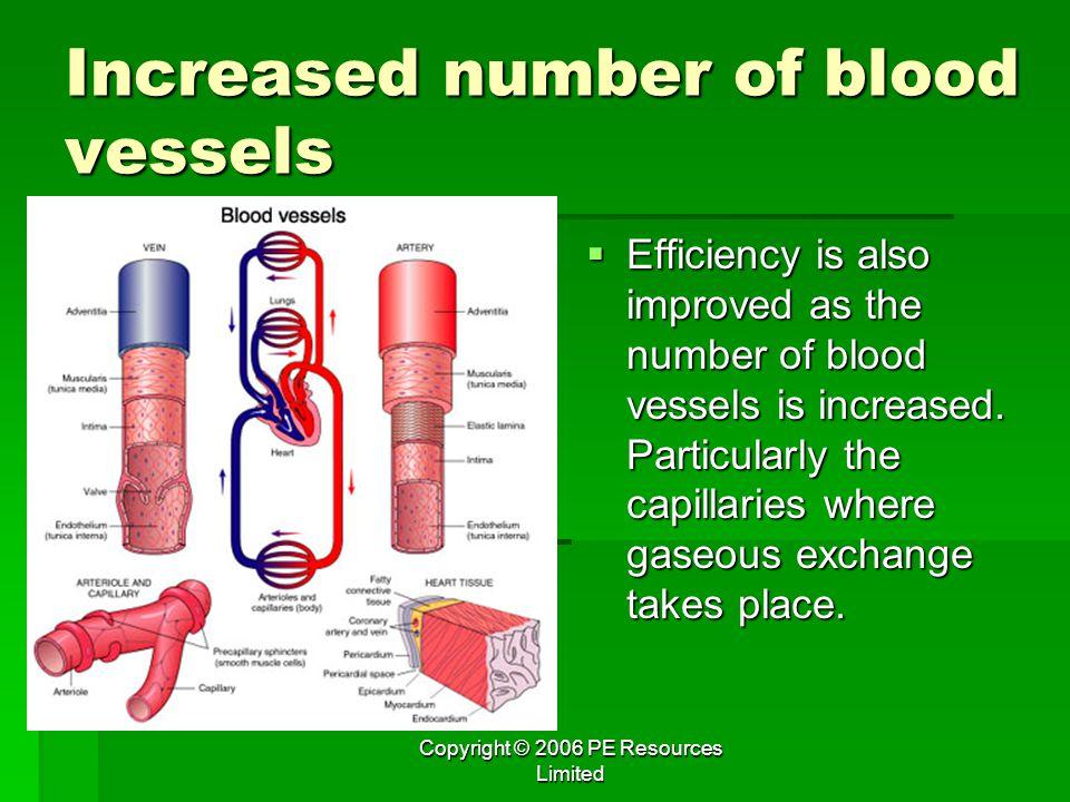 Increased number of blood vessels