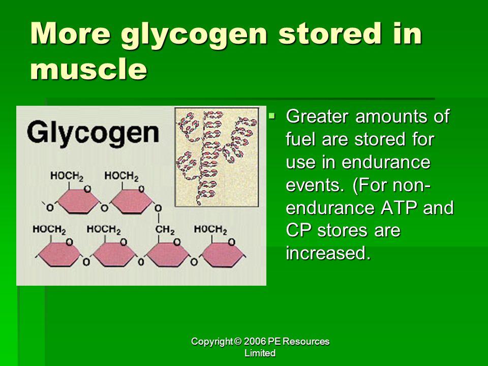More glycogen stored in muscle