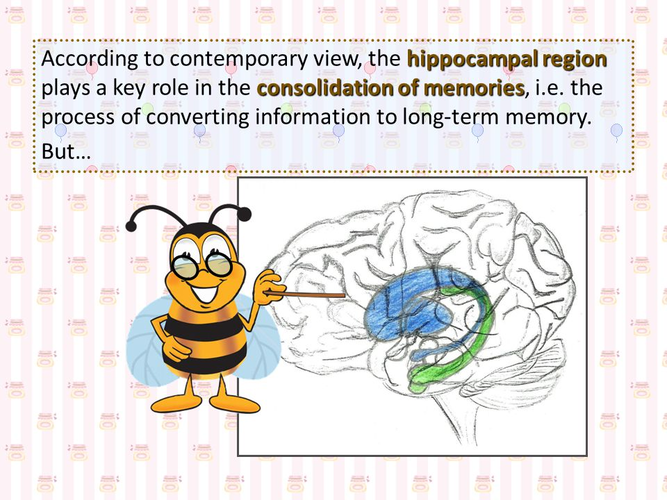 According to contemporary view, the hippocampal region plays a key role in the consolidation of memories, i.e. the process of converting information to long-term memory.