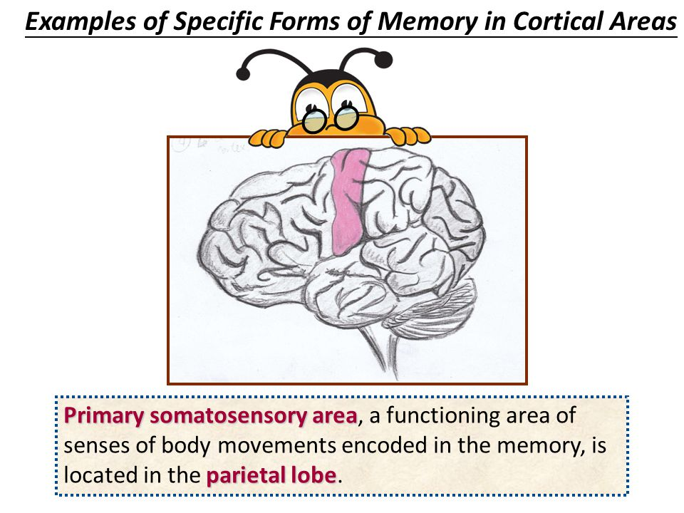Examples of Specific Forms of Memory in Cortical Areas