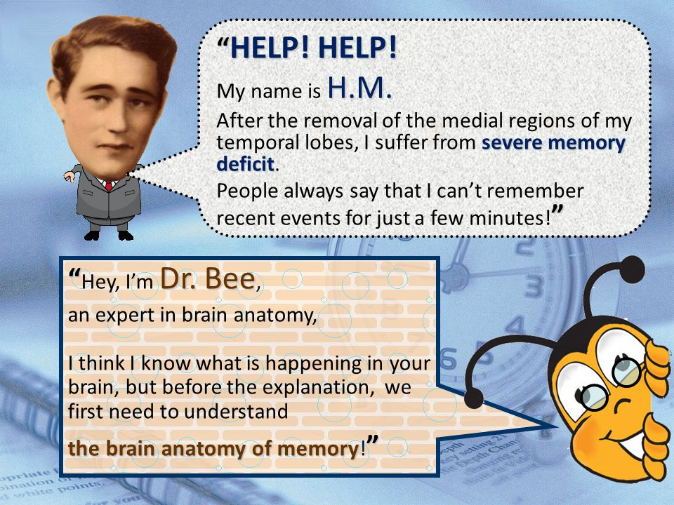 HELP! HELP! Hey, I'm Dr. Bee, the brain anatomy of memory!
