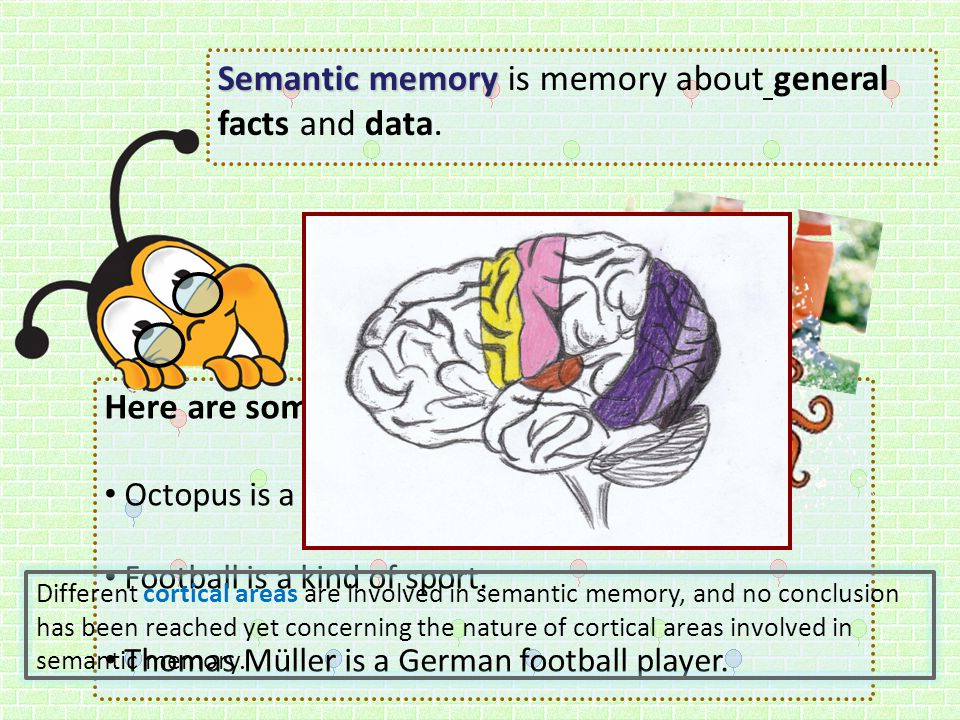 Semantic memory is memory about general facts and data.