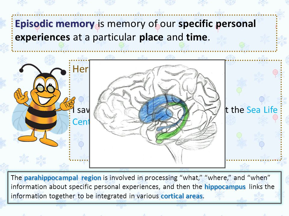 Episodic memory is memory of our specific personal experiences at a particular place and time.