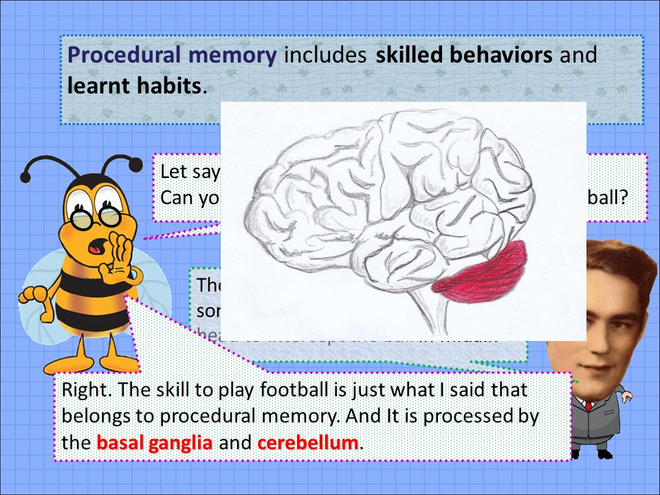 Procedural memory includes skilled behaviors and learnt habits.
