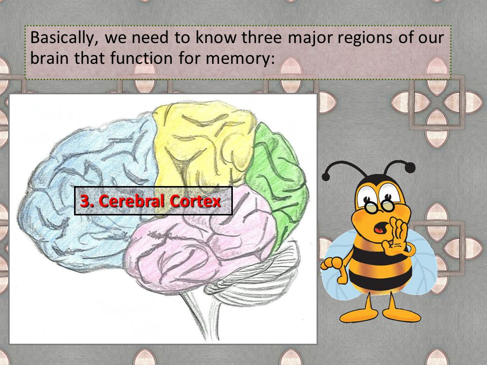 Basically, we need to know three major regions of our brain that function for memory: