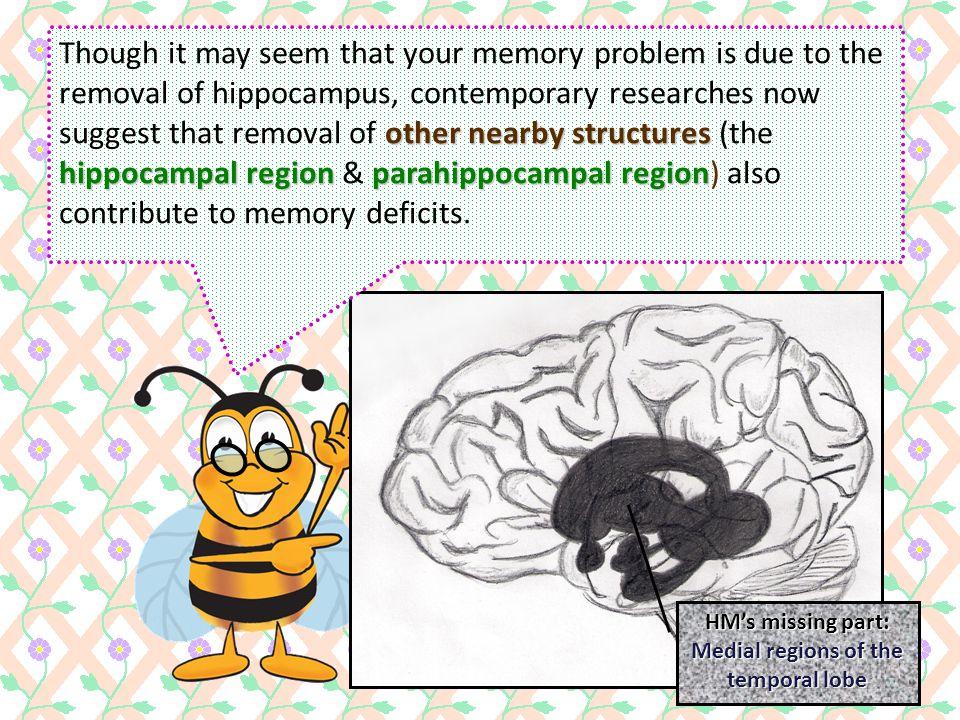 Medial regions of the temporal lobe