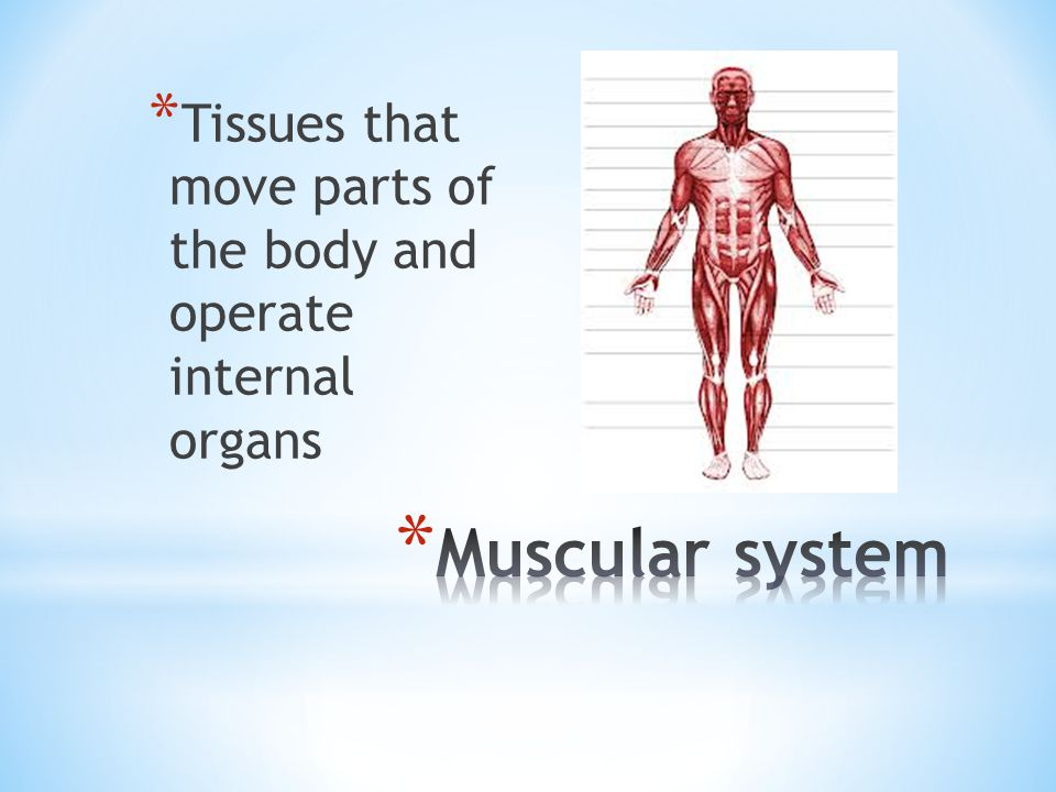 Tissues that move parts of the body and operate internal organs