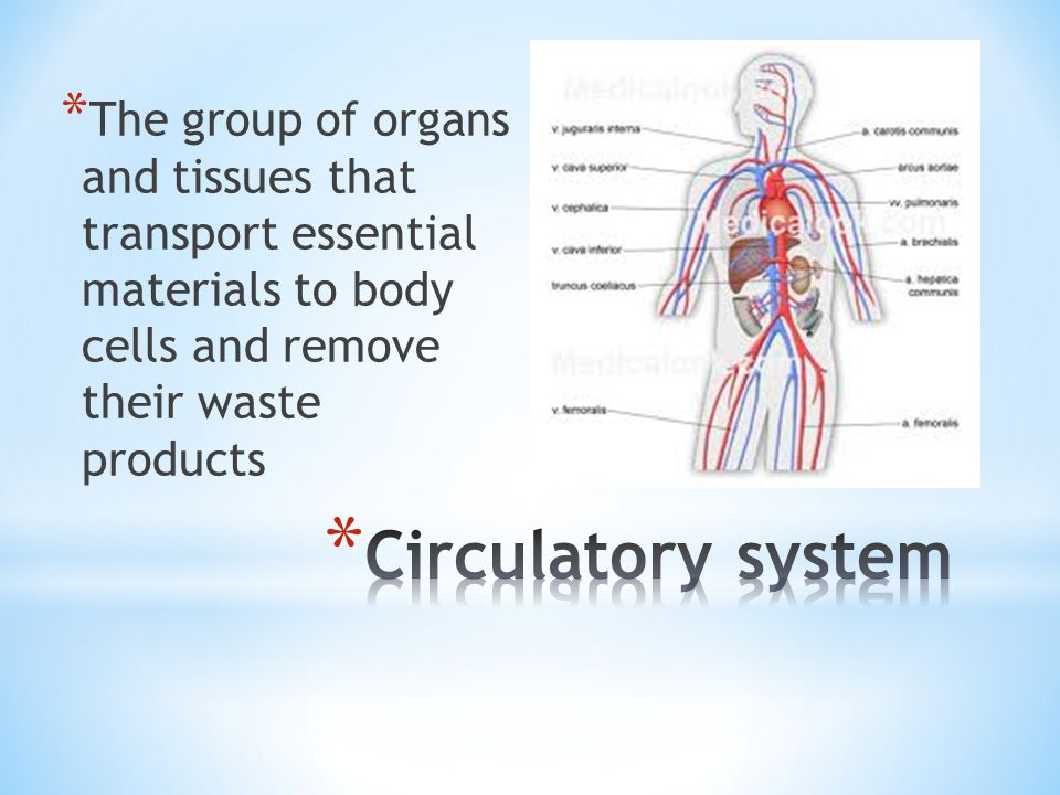 The group of organs and tissues that transport essential materials to body cells and remove their waste products