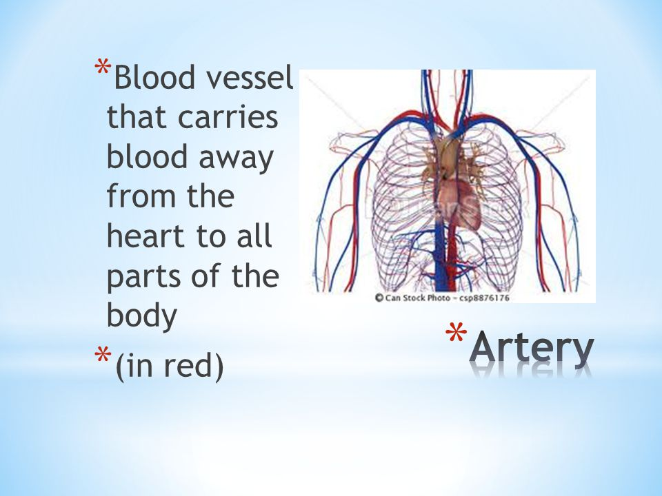 Blood vessel that carries blood away from the heart to all parts of the body