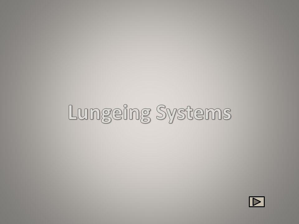 Lungeing Systems