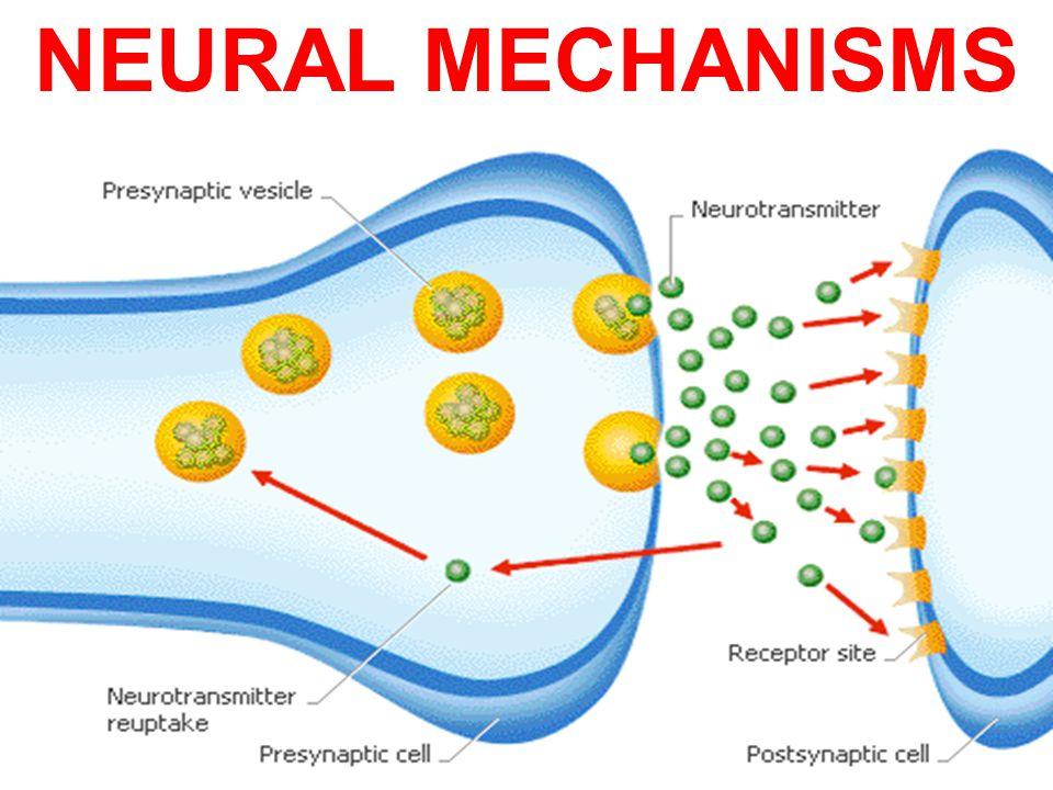 NEURAL MECHANISMS