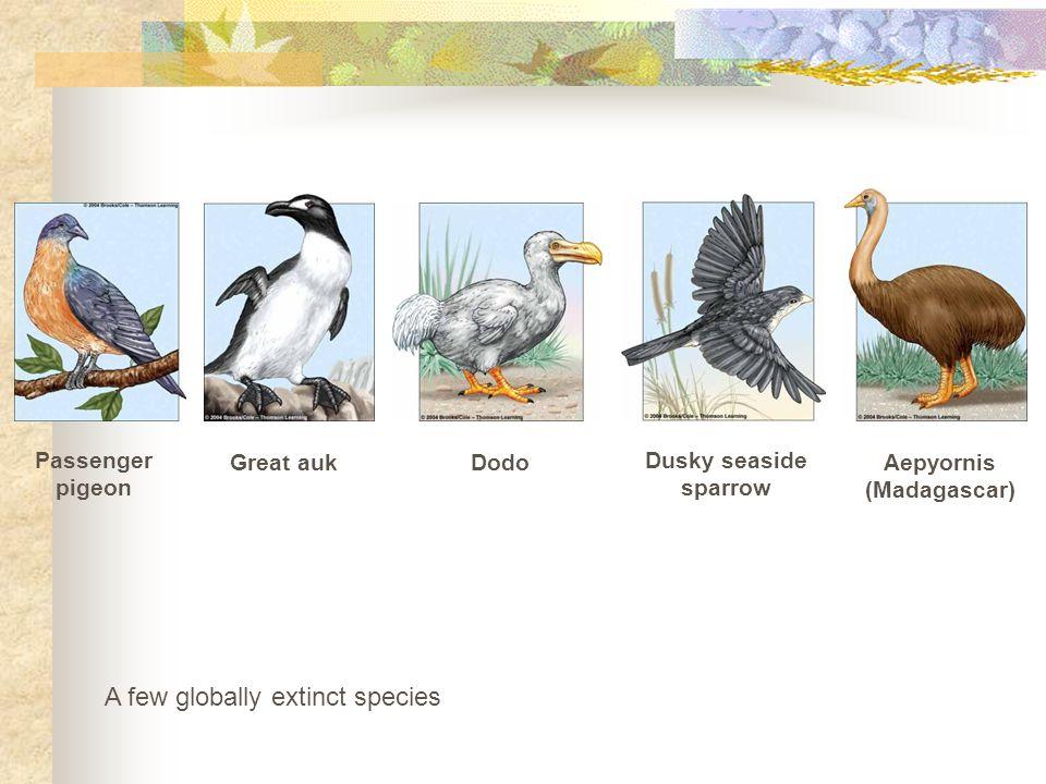 A few globally extinct species