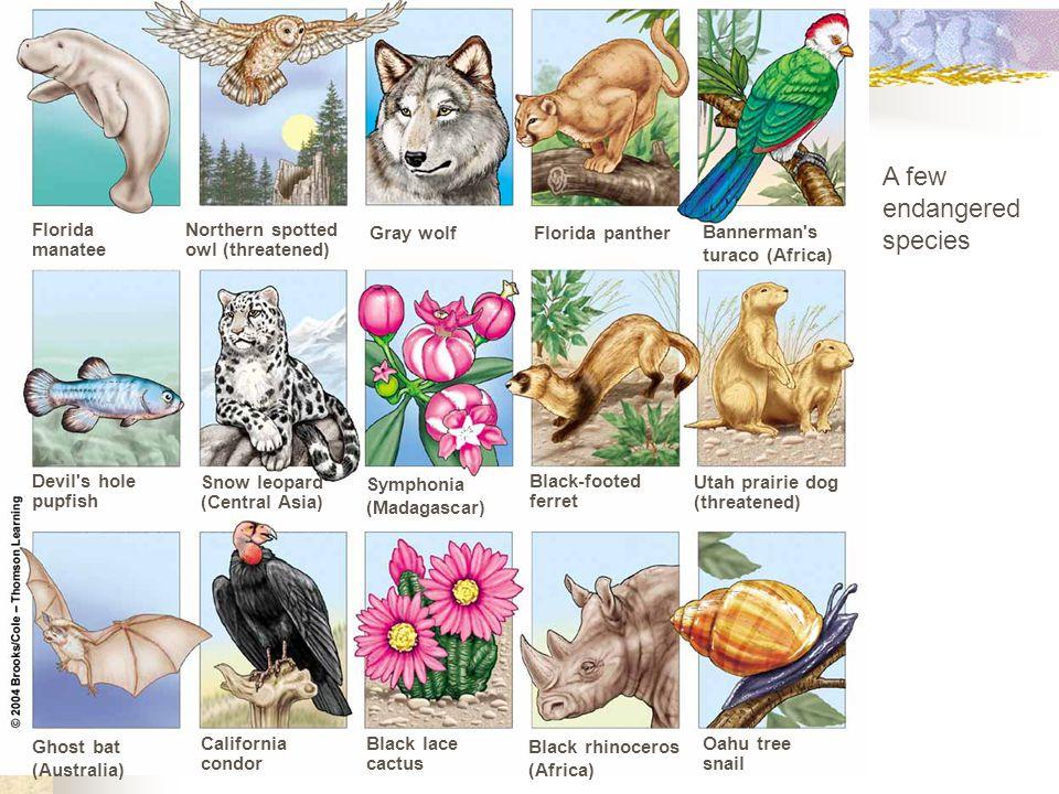 A few endangered species