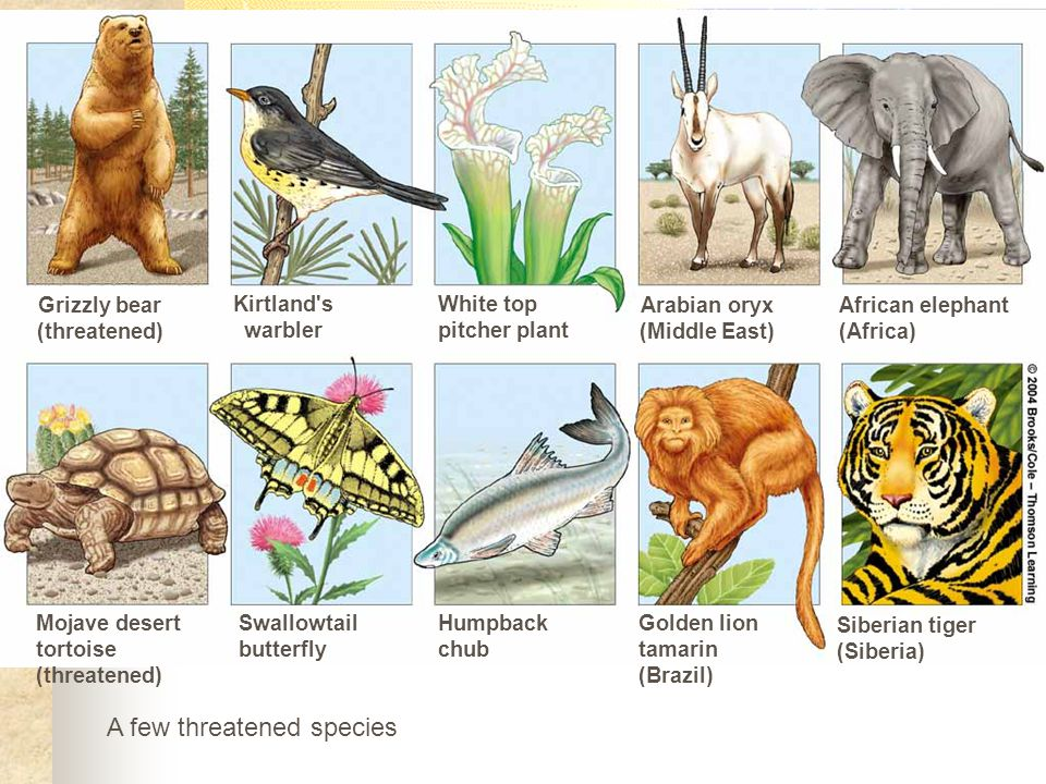 A few threatened species