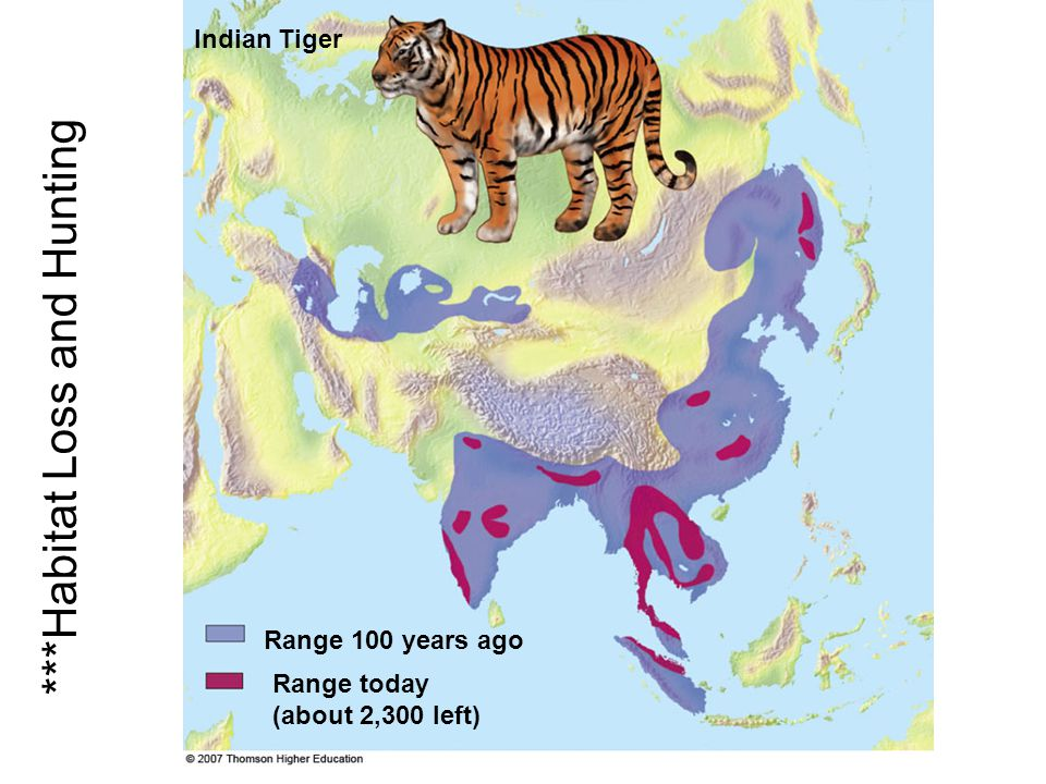 ***Habitat Loss and Hunting