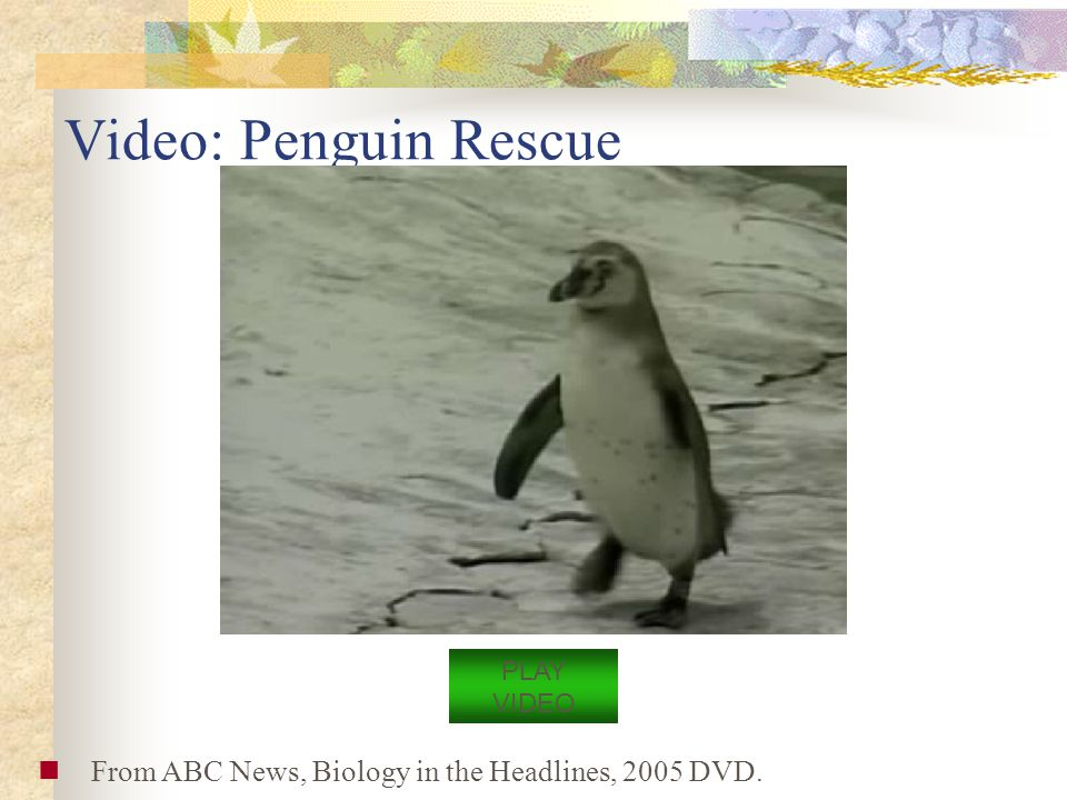 Video: Penguin Rescue PLAY VIDEO From ABC News, Biology in the Headlines, 2005 DVD.