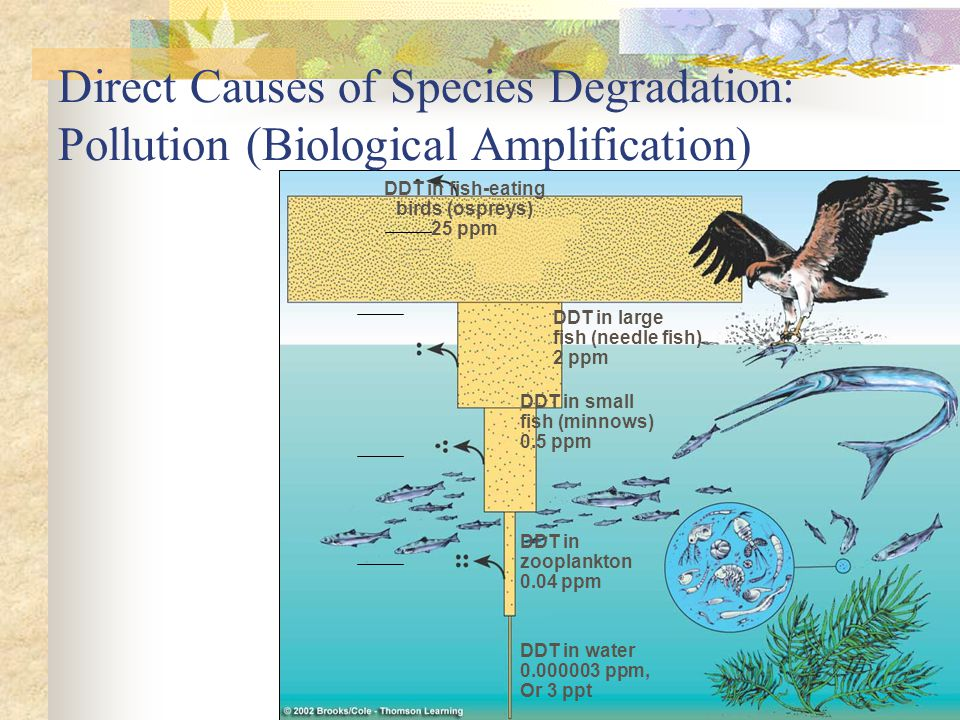 Direct Causes of Species Degradation: Pollution (Biological Amplification)