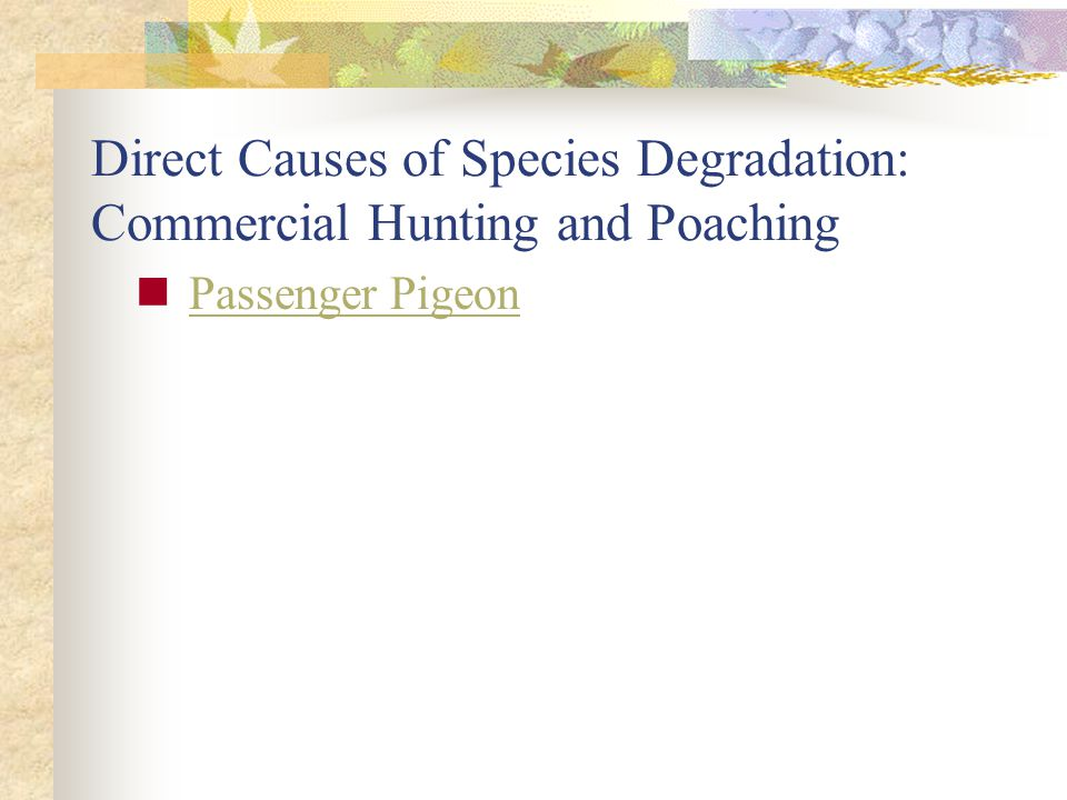 Direct Causes of Species Degradation: Commercial Hunting and Poaching