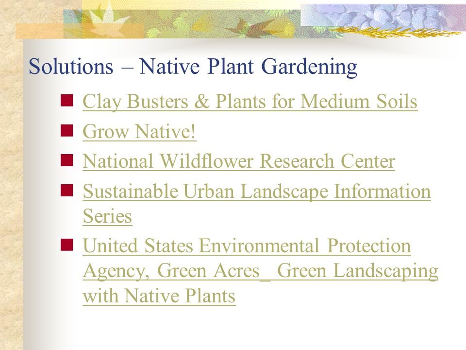 Solutions – Native Plant Gardening
