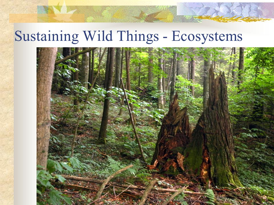 Sustaining Wild Things - Ecosystems