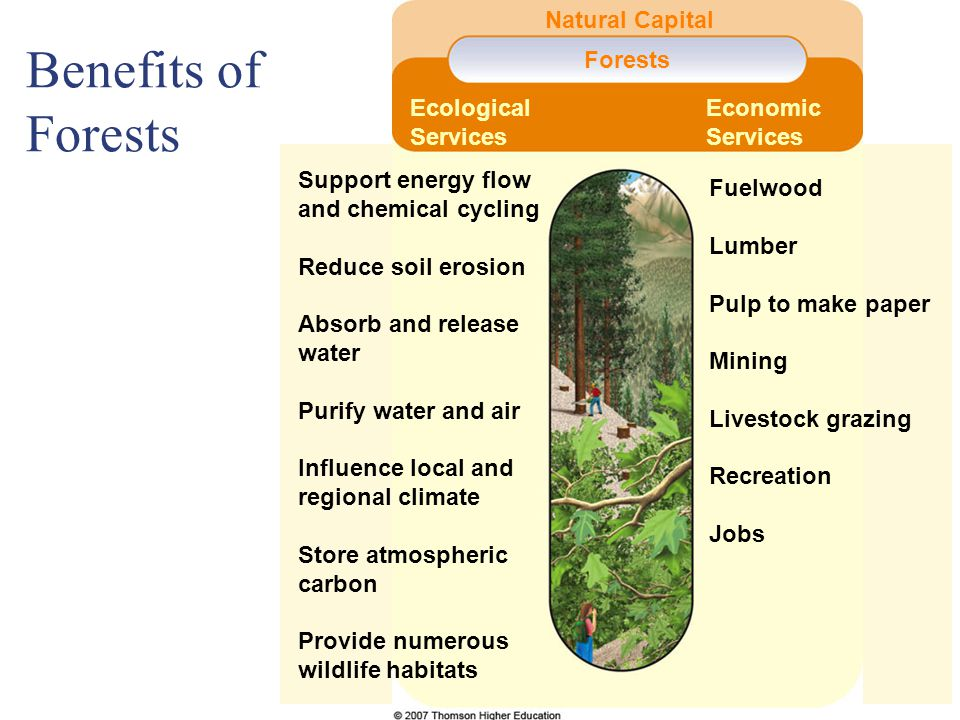 Benefits of Forests Natural Capital Forests Ecological Services