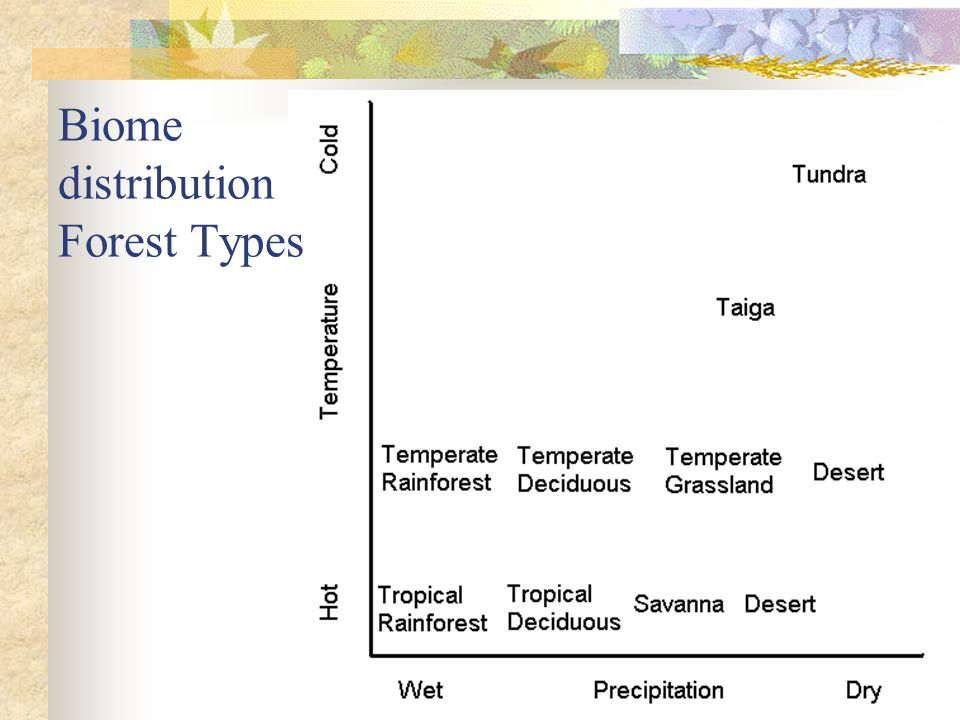 Biome distribution Forest Types