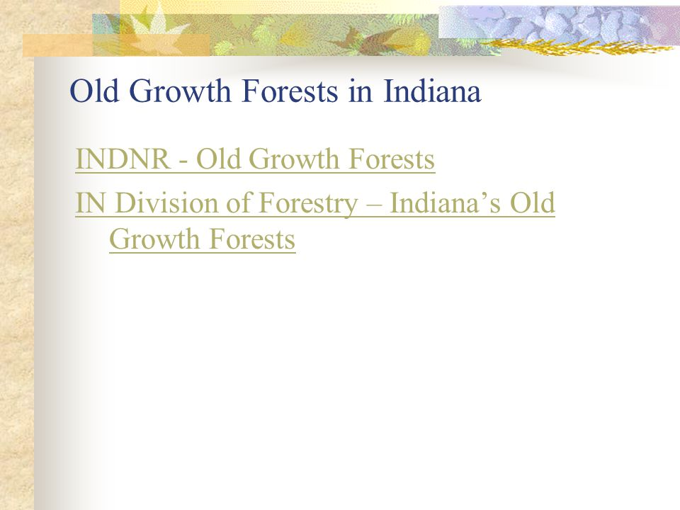 Old Growth Forests in Indiana