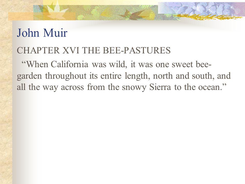 John Muir CHAPTER XVI THE BEE-PASTURES