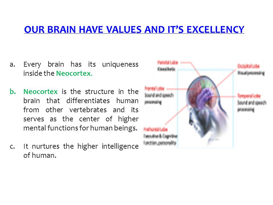 OUR BRAIN HAVE VALUES AND IT'S EXCELLENCY