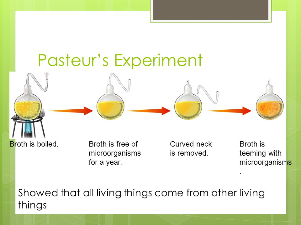 Pasteur's Experiment Broth is boiled. Broth is free of. microorganisms. for a year. Curved neck.