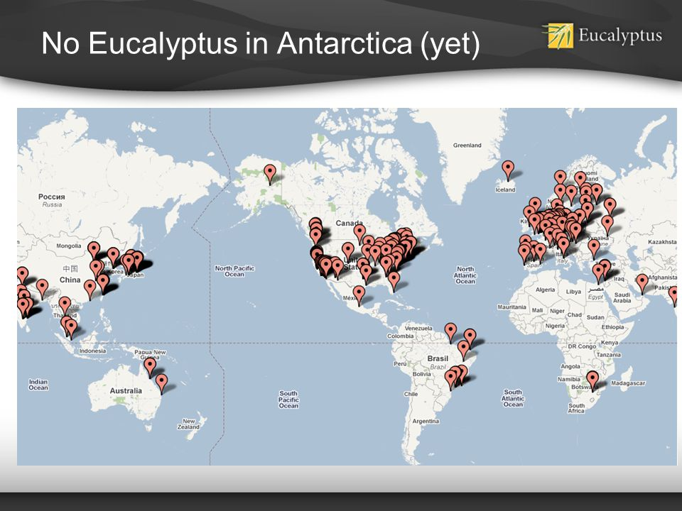 No Eucalyptus in Antarctica (yet)