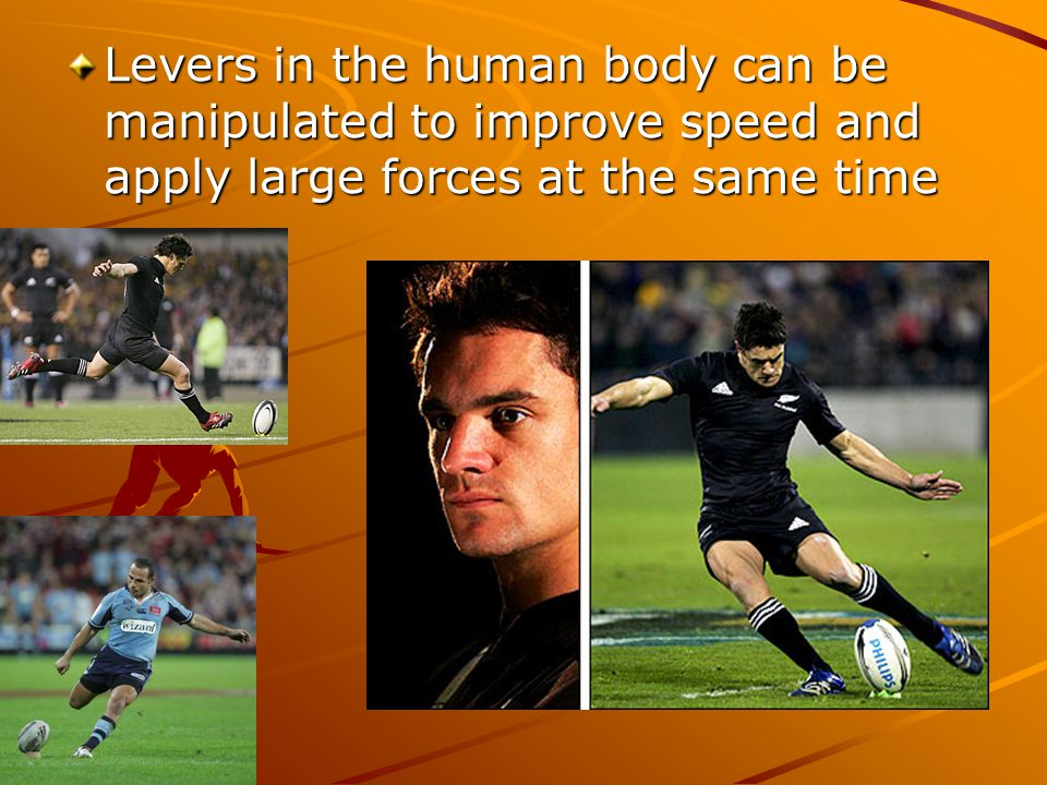 Levers in the human body can be manipulated to improve speed and apply large forces at the same time