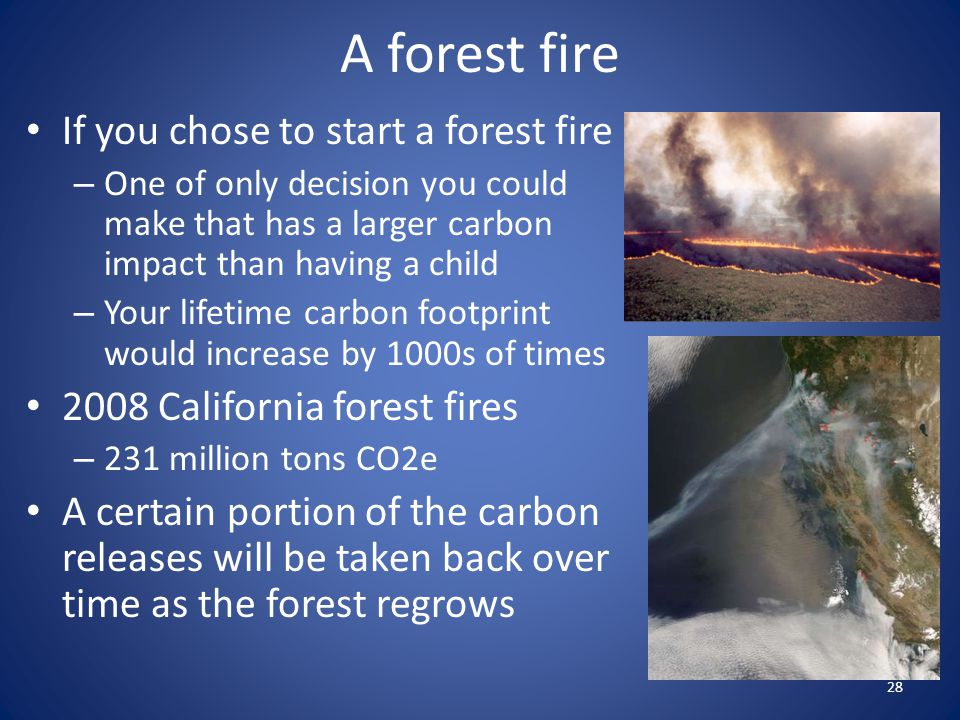 A forest fire If you chose to start a forest fire
