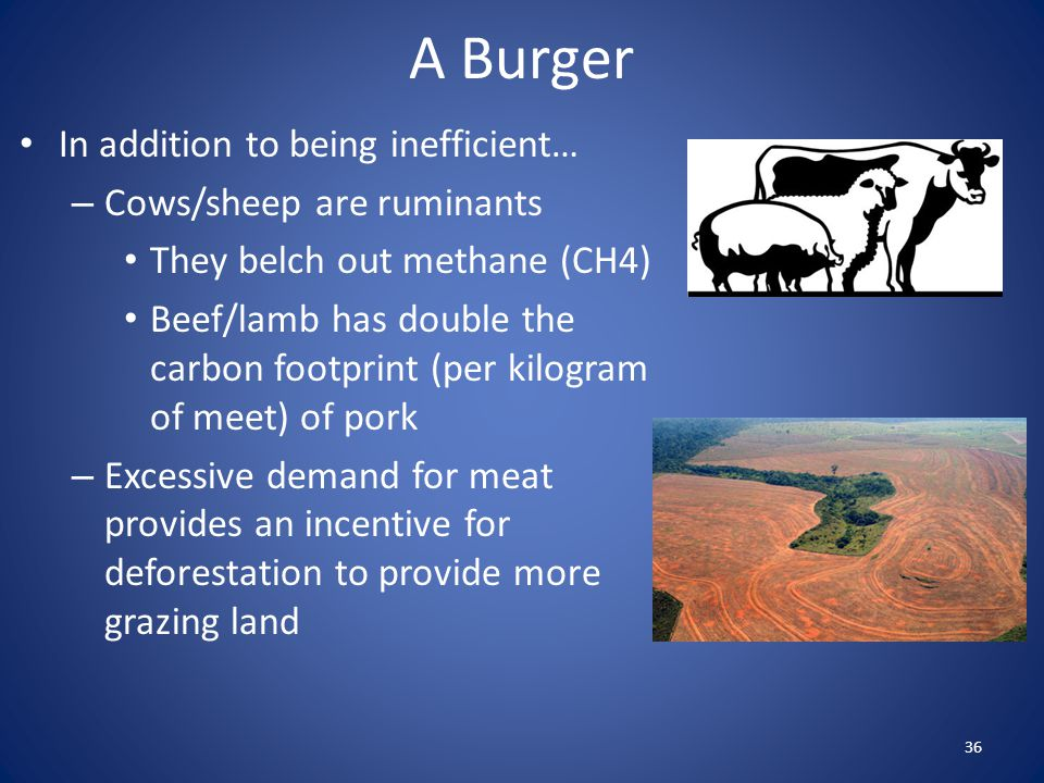 A Burger In addition to being inefficient… Cows/sheep are ruminants